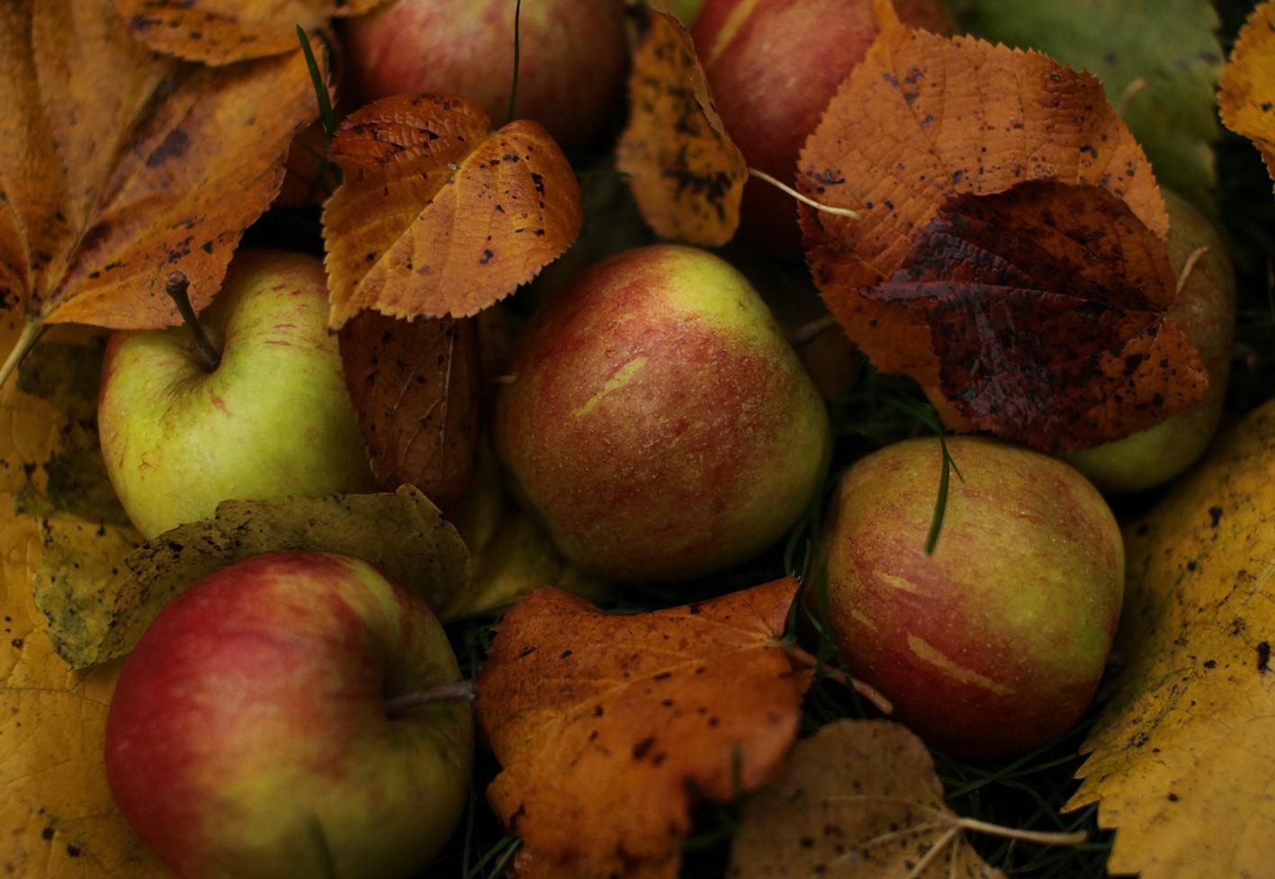 Seasonal Food Uk Autumn