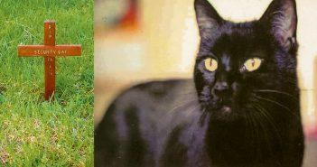 security-cat