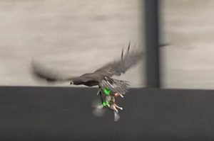 eagle/drone2