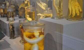 Scales and Tails display featuring specimens in jars
