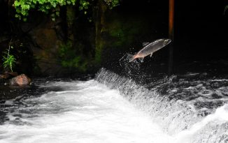 Shooting salmon is the latest in conservation