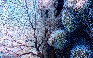 Could ocean coral reefs help us to identify alien life?