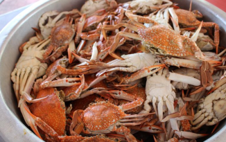 Crab shells could be used to protect against coronavirus