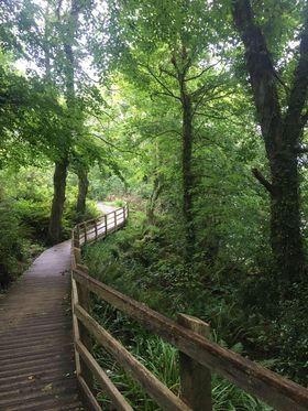 Recommendation: Treborth Botanical Gardens