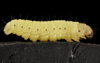 Could caterpillars solve our plastic problem?